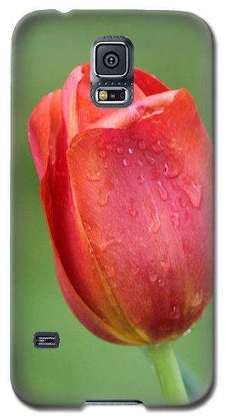 Red Leaner Galaxy S5 Case by Bill Woodstock