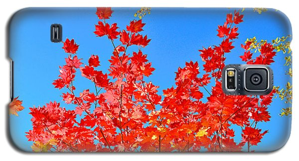 Galaxy S5 Case featuring the photograph Red Leaves by David Lawson