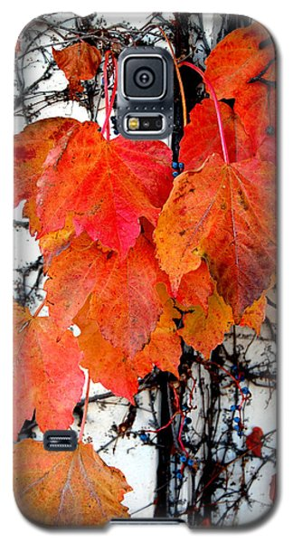 Red Leaves Of Fall Galaxy S5 Case