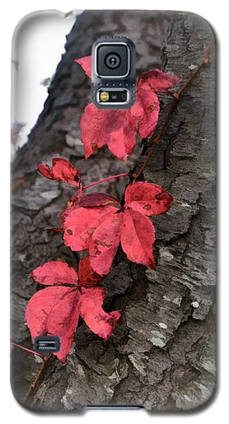 Red Leaves On Bark Galaxy S5 Case