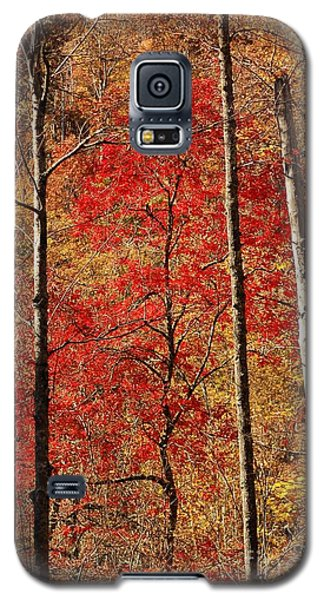 Red Leaves Galaxy S5 Case