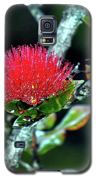 Red Lehua  Kawaiko'olihilihiokalikolehua Galaxy S5 Case
