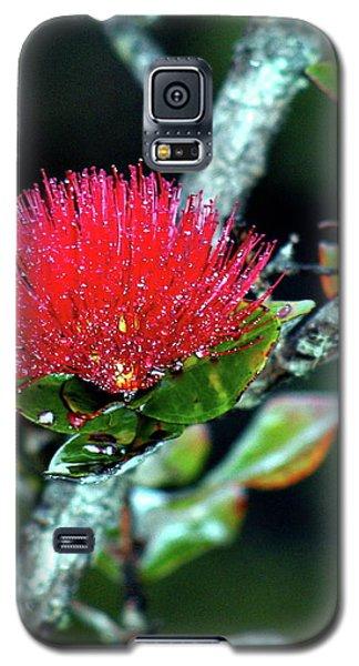 Red Lehua  Kawaiko'olihilihiokalikolehua Galaxy S5 Case by Lehua Pekelo-Stearns