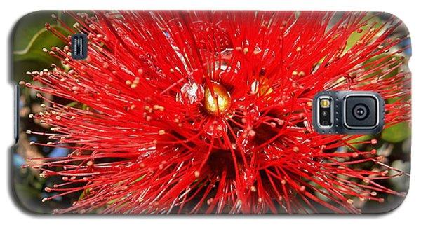 Red Lehua Galaxy S5 Case by Pamela Walton