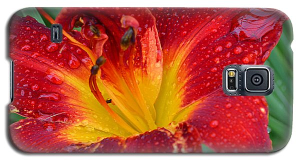 Red Lily After The Rain Galaxy S5 Case