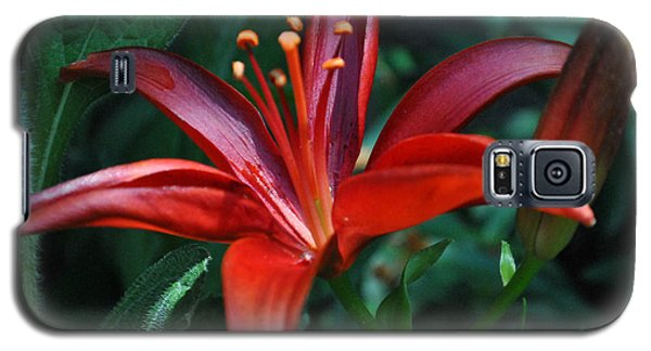 Galaxy S5 Case featuring the photograph Red Lily by Kelly Nowak