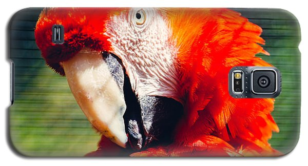 Red Macaw Closeup Galaxy S5 Case by Pati Photography