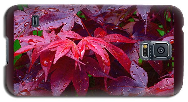 Galaxy S5 Case featuring the photograph Red Maple After Rain by Ann Horn