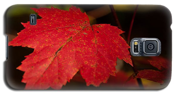 Red Maple Leaf In Fall Galaxy S5 Case