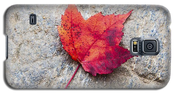 Red Maple Leaf On Granite Stone In A Square Format Galaxy S5 Case by Karen Stephenson