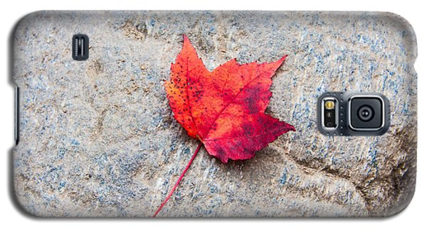 Red Maple Leaf On Granite Stone In Horizontal Format Galaxy S5 Case by Karen Stephenson