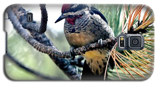 Red-naped Sapsucker On Pine Tree Galaxy S5 Case by Marilyn Burton