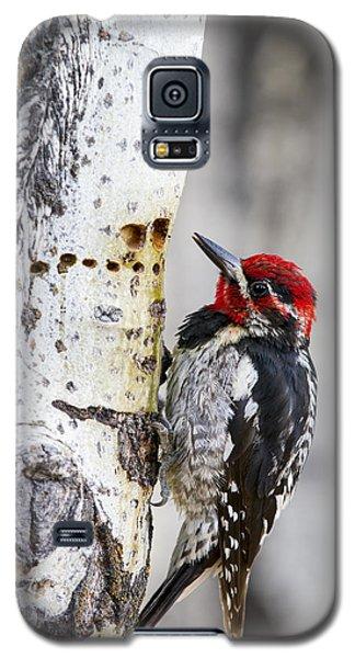 Red-naped Sapsucker Galaxy S5 Case