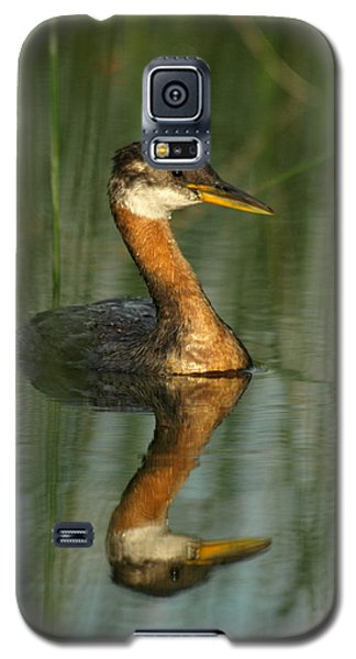 Galaxy S5 Case featuring the photograph Red-necked Grebe by James Peterson