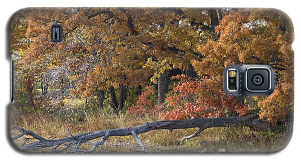Red Oaks On The Shore Galaxy S5 Case