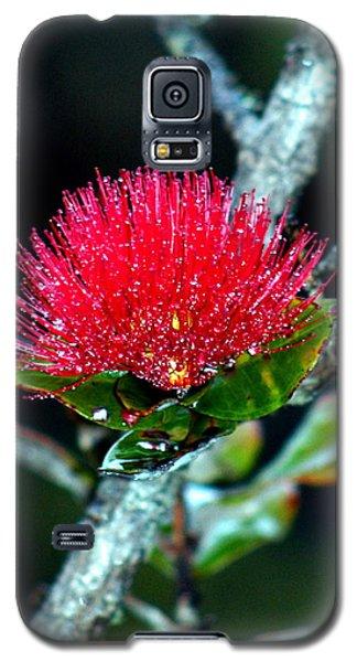 Red Ohia Lehua In Hawaii Volcano Mist Galaxy S5 Case by Lehua Pekelo-Stearns