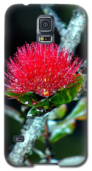 Galaxy S5 Case featuring the photograph Red Ohia Lehua In Hawaii Volcano Mist by Lehua Pekelo-Stearns