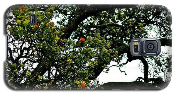 Red Ohia Lehua Tree Galaxy S5 Case