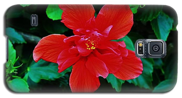 Galaxy S5 Case featuring the photograph Red On Red Double by Craig Wood