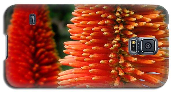 Red-orange Flower Of Eremurus Ruiter-hybride Galaxy S5 Case