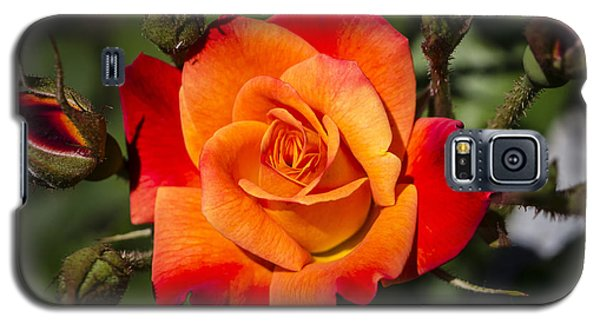 Red-orange Rose Galaxy S5 Case