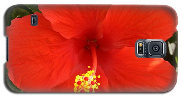 Red Pansy Galaxy S5 Case