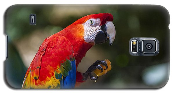Macaw Galaxy S5 Case - Red Parrot  by Garry Gay