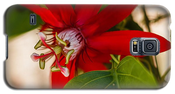 Galaxy S5 Case featuring the photograph Red Passion Flower by Jane Luxton