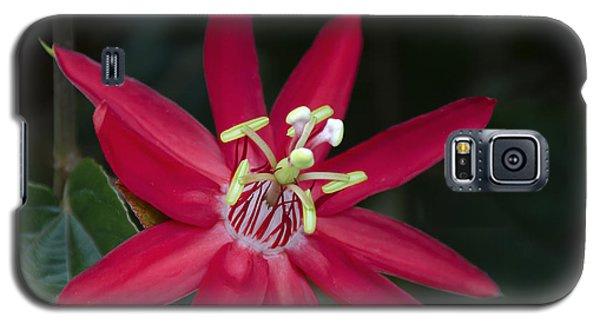 Red Passion Flower Galaxy S5 Case