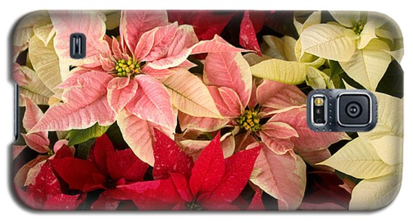 Galaxy S5 Case featuring the photograph Red Pink And White Poinsettias by Chris Scroggins
