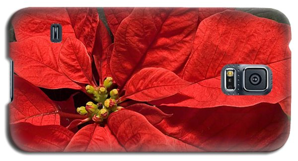 Red Poinsettia Plant For Christmas Galaxy S5 Case