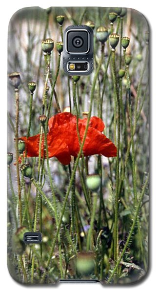 Red Poppy And Buds Galaxy S5 Case