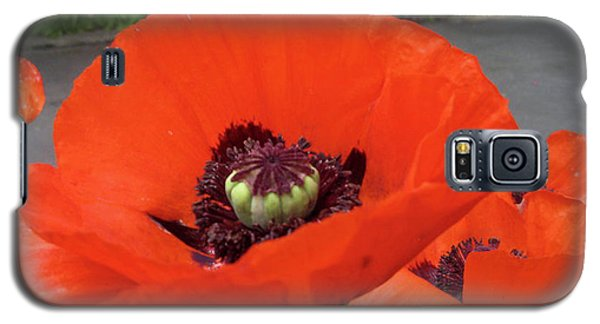 Galaxy S5 Case featuring the photograph Red Poppy by Barbara Griffin