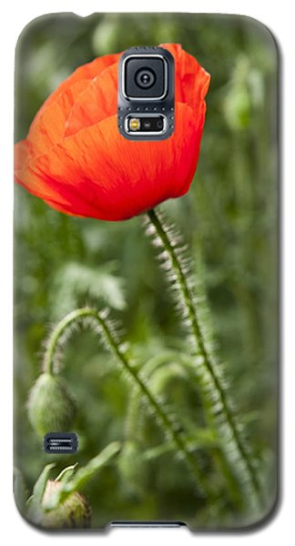 Galaxy S5 Case featuring the photograph Red Poppy by David Isaacson