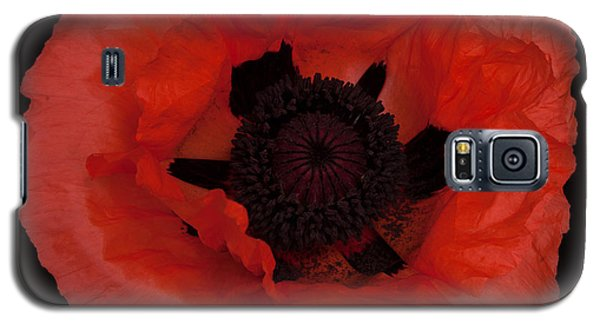 Red Poppy Galaxy S5 Case by Susan Rovira