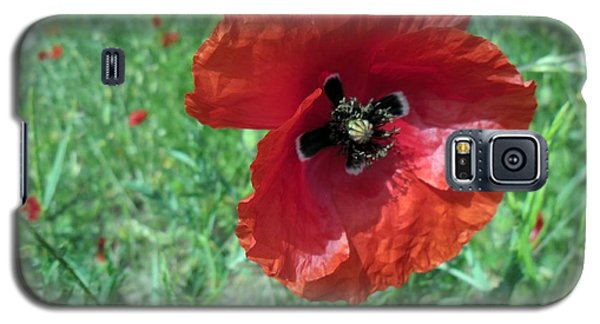 Galaxy S5 Case featuring the photograph Red Poppy by Vesna Martinjak