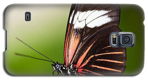 Galaxy S5 Case featuring the photograph Red Postman Butterfly by Zoe Ferrie