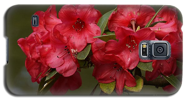 Galaxy S5 Case featuring the photograph Red Rhododendron by Inge Riis McDonald