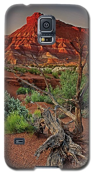 Red Rock Butte And Juniper Snag Paria Canyon Utah Galaxy S5 Case