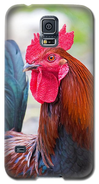 Red Rooster Galaxy S5 Case