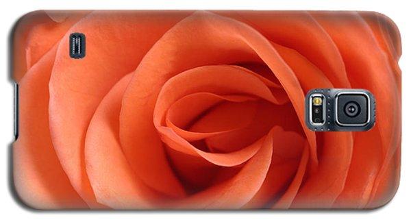 Red Rose Floribunda Closeup Galaxy S5 Case