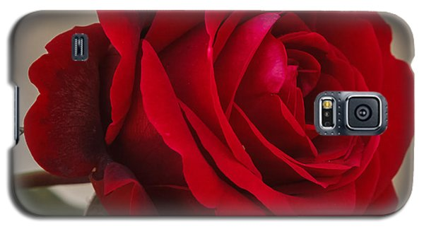 Red Rose Galaxy S5 Case by Jane Luxton