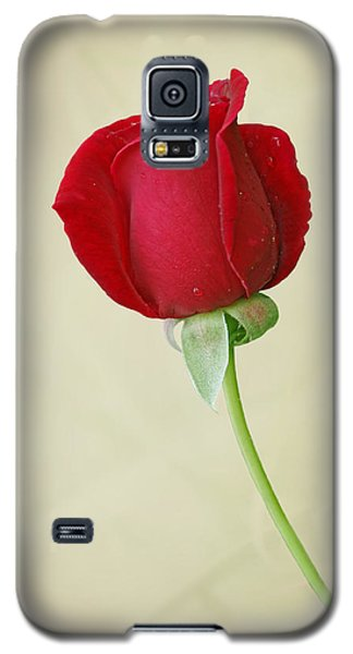 Red Rose On White Galaxy S5 Case by Sandy Keeton