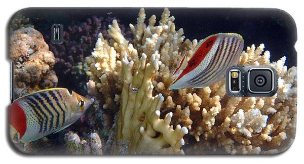 Red Sea Beauty 2 Galaxy S5 Case