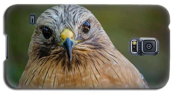 Red Shouldered Hawk Galaxy S5 Case by Linda Villers