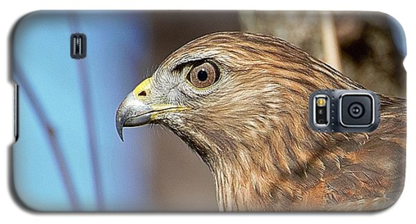Red-shouldered Hawk Galaxy S5 Case by Ludwig Keck