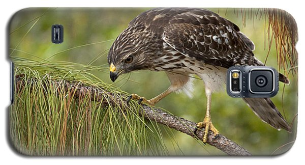 Red Shouldered Hawk Photo Galaxy S5 Case