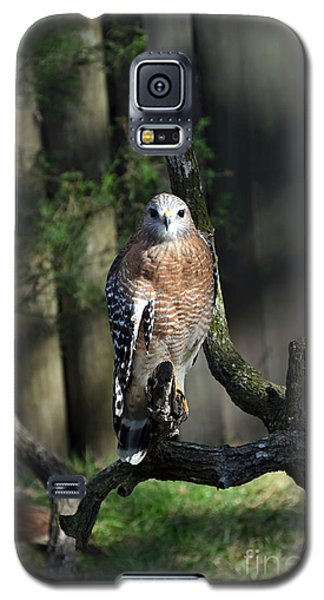 Red Shouldered-hawk Galaxy S5 Case by Robert Meanor