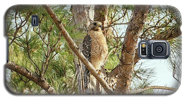 Galaxy S5 Case featuring the photograph Red-shouldered Hawk by Zoe Ferrie