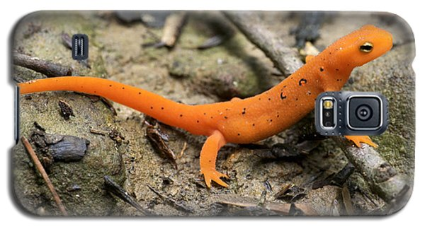 Red-spotted Newt Galaxy S5 Case